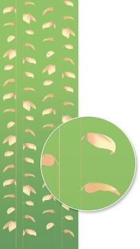 Mustertapete Plantas 01