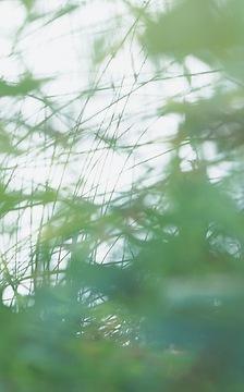 Fototapete Yasumi