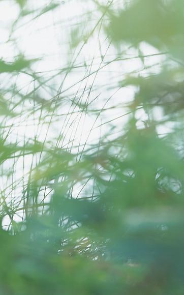 Fototapete Yasumi - Gesamtansicht